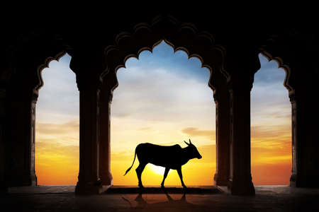Holy Indian cow silhouette in old temple arch at dramatic orange sunset sky background