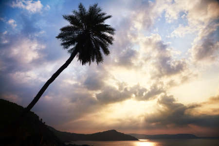 Palm tree silhouette near the ocean at cloudy sky in Gokarna, Karnataka, India photo