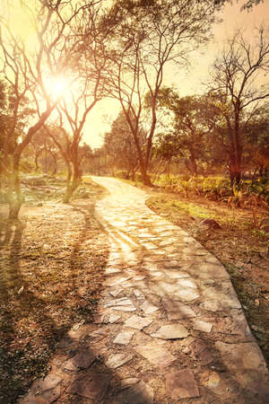 new delhi: Road in the Buddha Jayanti park at sunset, New Delhi, India