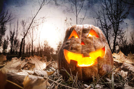 Halloween pumpkin glowing inside in dark autumn forest photo