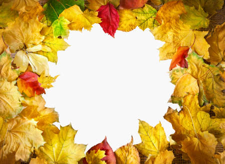 Frame from yellow, red and orange maple leaves isolated on white background  Free space for text photo