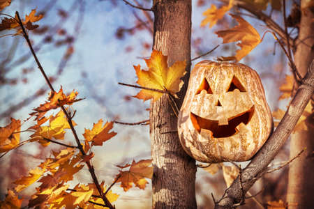 Halloween funny pumpkin on the autumn forest Stock Photo