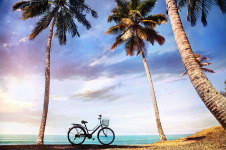 varkala: Bicycle with basket on the beach near palm trees and ocean in India Stock Photo