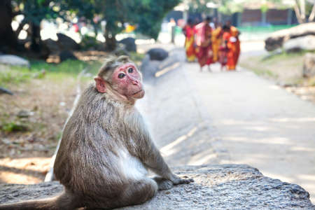 mamallapuram: Monkey sitting on the stone and looking at camera in Mamallapuram, Tamil Nadu, India Stock Photo