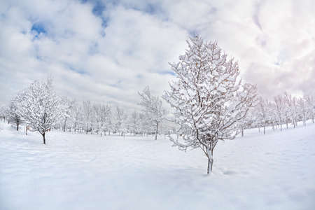 snowbank: Winter scenic with snow trees in the park at blue cloudy sky in Kazakhstan