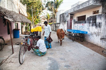 mamallapuram: Mamallapuram, Tamil Nadu, INDIA - January 25  Indian men repairing bicycle and cow walking down the narrow street in Mamallapuram on January 25, 2013  Editorial