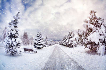 Winter park with snow trees, benches and road at blue cloudy sky photo