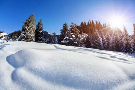 Winter forest with snow trees at blue sky with sun photo