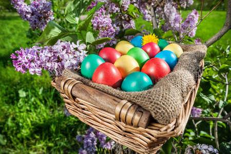arbol de pascua: Coloridos huevos de Pascua en la cesta en el árbol de la lila Foto de archivo