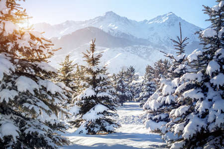 snowbank: Winter forest at mountains and blue sky background Stock Photo
