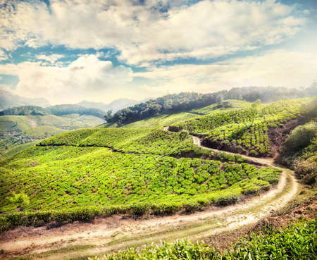 agriculture india: Tea plantation with road at cloudy sky in Munnar, Kerala, India  Stock Photo