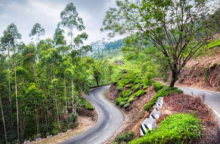 munnar: Tea plantations near the road in Munnar hills, Kerala, India  Stock Photo