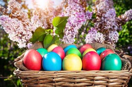 Easter colorful eggs in the basket on the lilac tree photo