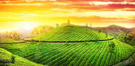 ムンナール、ケーララ、インドでの夕焼け空でお茶のプランテーションの丘のパノラマ