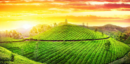 Panorama van de thee plantages heuvels bij zonsondergang hemel in Munnar, Kerala, India