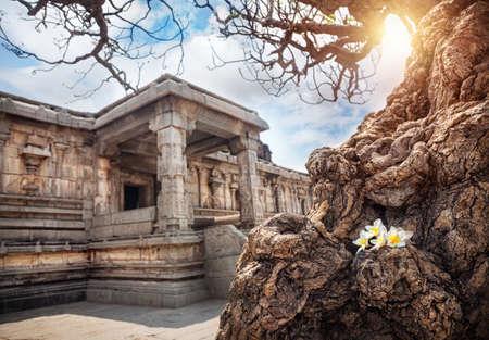 Old tree with white flowers near ancient ruins of Vijayanagara Empire at blue sky in Hampi, Karnataka, India Stock Photo - 26542017