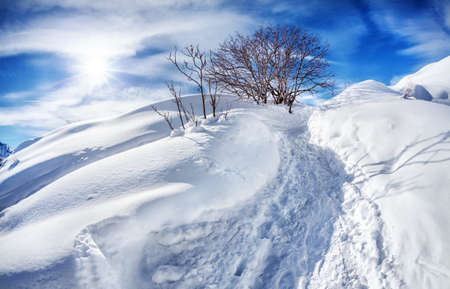 snowbank: Winter mountain scenery with tree at blue sky with sun