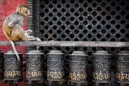 Monkey with flower garland sitting on prayer wheels near Swayambhunath stupa in Kathmandu, Nepal photo