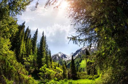 ジュンガル アラタウ、カザフスタン、中央アジアの山針葉樹林