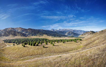 Panorama of Kok Zhailyau mountain valley with fir forest at blue sky in Almaty, Kazakhstan