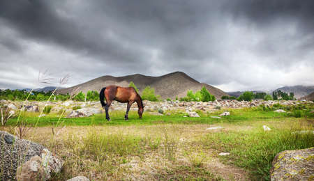 issyk kul: Horse in the mountains at dramatic overcast sky in central Asia
