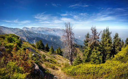 tyan shan mountains: Mountain scenery with fir forest at blue sky in Almaty, Kazakhstan