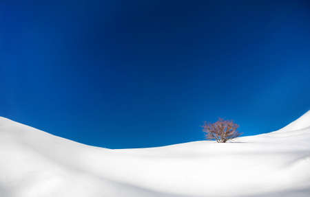 snowbank: Lonely tree in the snowy mountains at blue sky in winter Stock Photo