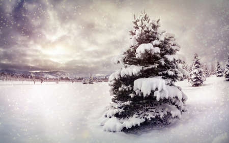cristmas card: Winter park with snow trees at dramatic sky