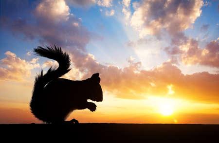 Eekhoorn silhouet eten van zaden op het dak op bewolkte zonsondergang op de achtergrond