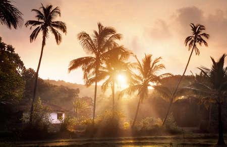Palm tree tropical village at sunrise in Goa, India Stock Photo
