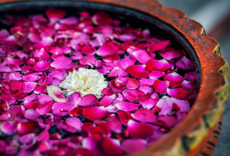 aroma bowl: White flower with red rose petals in the bowl in SPA salon