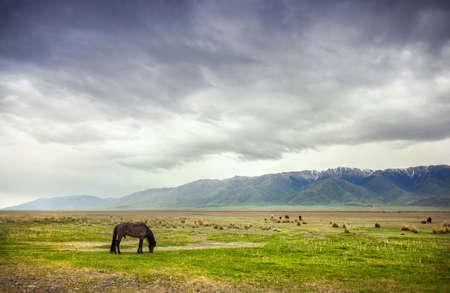 카자흐스탄, 중앙 아시아에서에서 Alakol 호수 근처 극적인 흐린 된 하늘 산에서 말