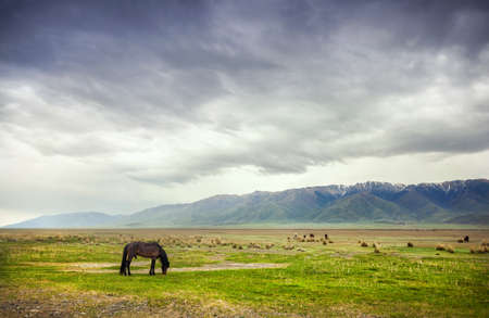 Horse in the mountains at dramatic overcast sky near Alakol lake in Kazakhstan, central Asia Stock Photo