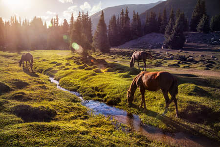 Horses in the Gregory gorge mountains of Kyrgyzstan, Central Asia 写真素材