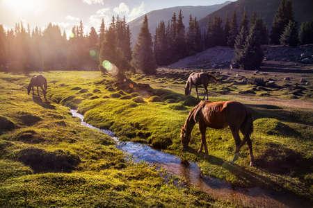 Paarden in de Gregory kloof bergen van Kirgizstan, Centraal-Azië