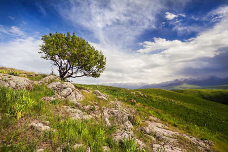 tyan shan mountains: Lonely tree in the mountains at dramatic cloudy sky in Ushkonyr near Chemolgan, Kazakhstan, central Asia Stock Photo