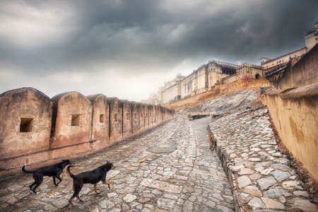 amber fort: Dogs running to Amber fort at overcast sky in Jaipur, Rajasthan, India