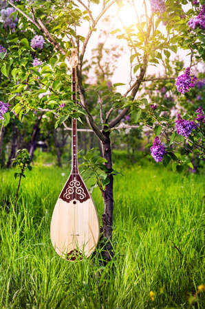 kazakh: Dombra Kazakh instrument in the garden with blooming lilac flowers