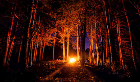 Dark forest with campfire at night Stockfoto