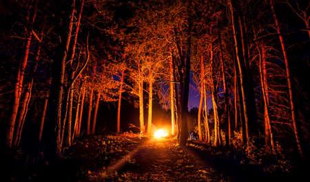 Dark forest with campfire at night Standard-Bild