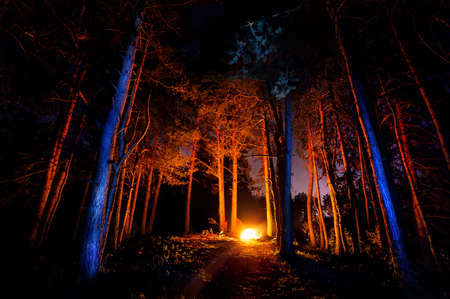 camp: Dark forest with campfire at night Stock Photo