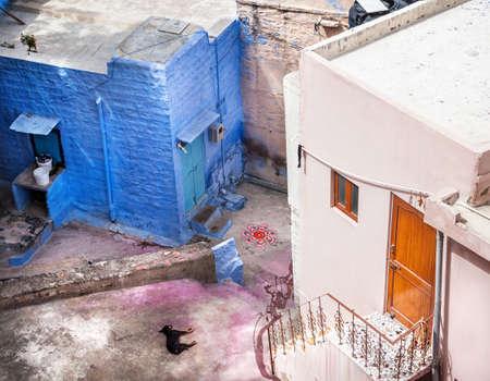 wood door: Sleeping dog on the Jodhpur street after Holi celebration in Blue city of Rajasthan, India