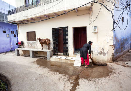 brooming: AGRA, UTTAR PRADESH, INDIA - FEBUARY 24, 2015: Indian woman cleaning her house with broom, goat standing nearby at narrow street of Taj Ganj district.