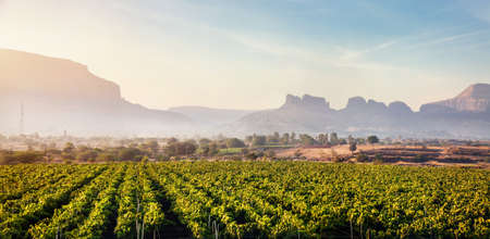 Vineyard at sunrise in the village and mountains at background in Nasik, Maharashtra, India