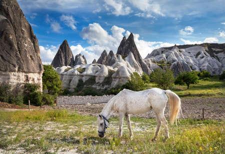 geological formation: White horse feeding grass at tufa geological formation called fairy chimneys in Cappadocia, Turkey