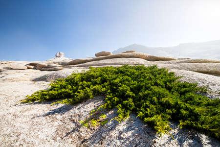 Extinct volcano Bektau Ata and plant on the rock in the desert of eastern Kazakhstan