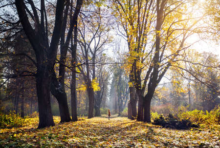 yellow trees: Woman standing at forest with yellow autumn trees