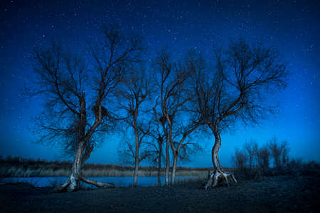siluet: Silhouette of Turanga trees under starry night sky in the desert Stock Photo