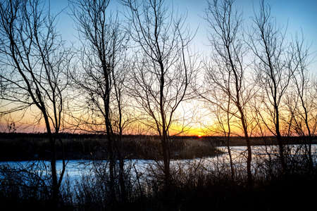 siluet: Silhouette of trees and frozen river at sunset