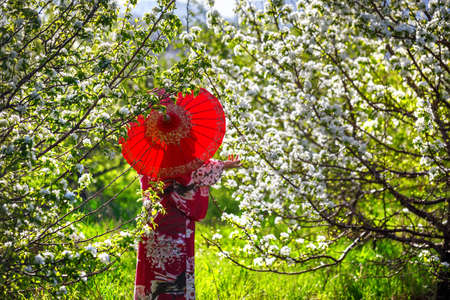 Woman in kimono with red umbrella in the garden with cherry flowers blossom at sunrise Stock Photo